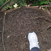 I put my foot in this photo to show the size of the ant mound. These were Rochester NY sized black ants so quite large compared to the Southern California ants that often invate our homes.