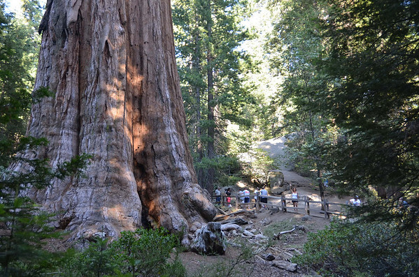 California/Sequoia National Park 2012