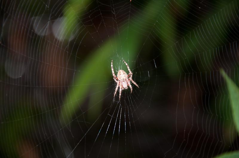 Spider at Carlsbad