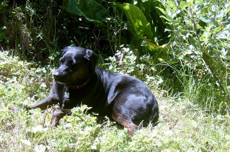 Wild Molly Dog