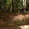 Rotting cedar log