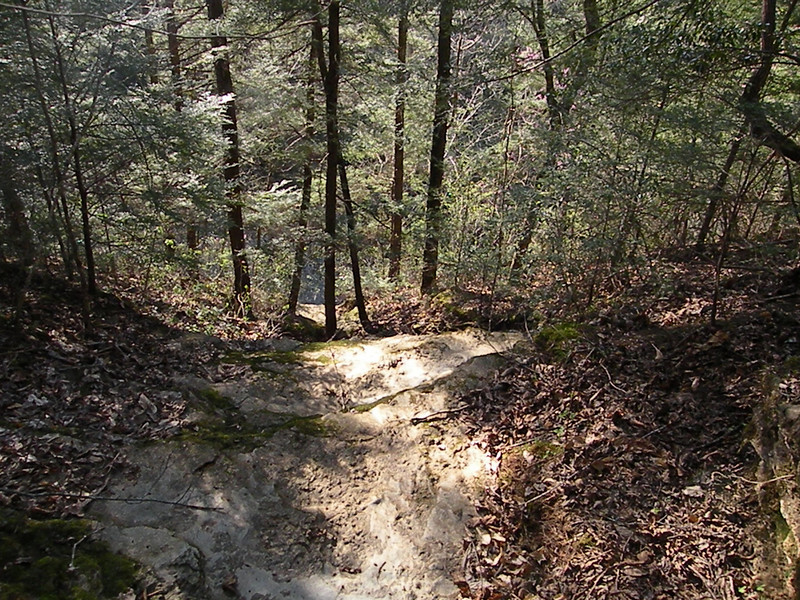 This is NOT a trail, but a dry creek bed above Spring Creek.<br /> Spring Creek is one of three State Scenic Rivers in the area, but there is no public access to it. It is a hundred or so feet down from here.
