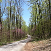 Scenic country road through Standing Stone State Forest. There are two areas here to enjoy... the State Park and the State Forest.