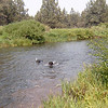 Gita and Molly swimming in the Deschutes