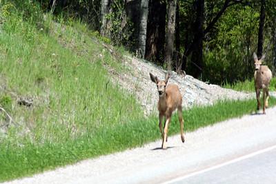 Look the deer in Canada look the same as the deer in Idaho. ;)