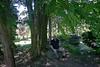 021 Sonnenberg Trees