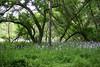 013 Corbett Glen wild flowers