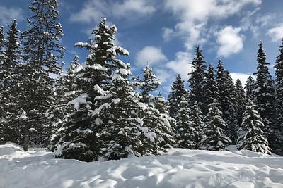 A winter wonderland with a recent snowfall.