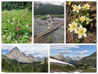 "A long hike out to Burstall Pass through wildflowers and over makeshift ""bridges"" across the glacial melt runoff."