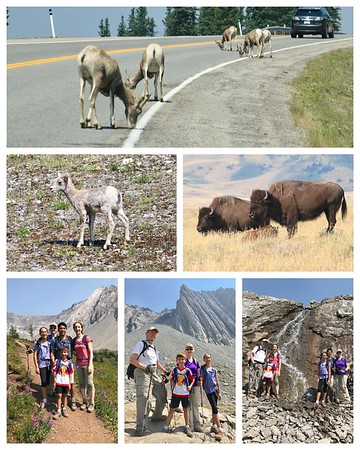 Critters today...lots of big horn sheep and even some babies in the middle of the road and some bison in Waterton Park! Great hike up Ptarmigan Cirque at Highwood Pass!