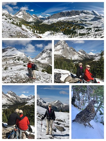 We have never seen Burstall Pass look this beautiful...plenty of snow and even a family of ptarmigans on the trail!