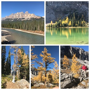 Last hike...back to reality tomorrow! Rock Bound Lake ( behind Castle Mountain) was glorious today! Lots of Larches and beautiful weather ☀️☀️