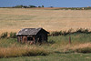A little old shed along the Trans-Canada that I often photograph on the way by.