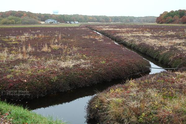Cranberry Bog 2