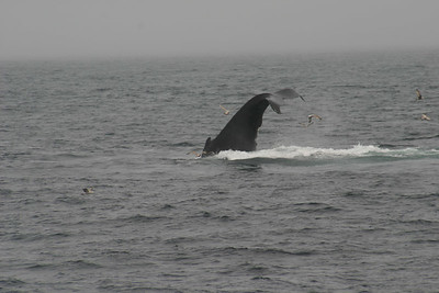 Cape Cod Whale Watching Trip