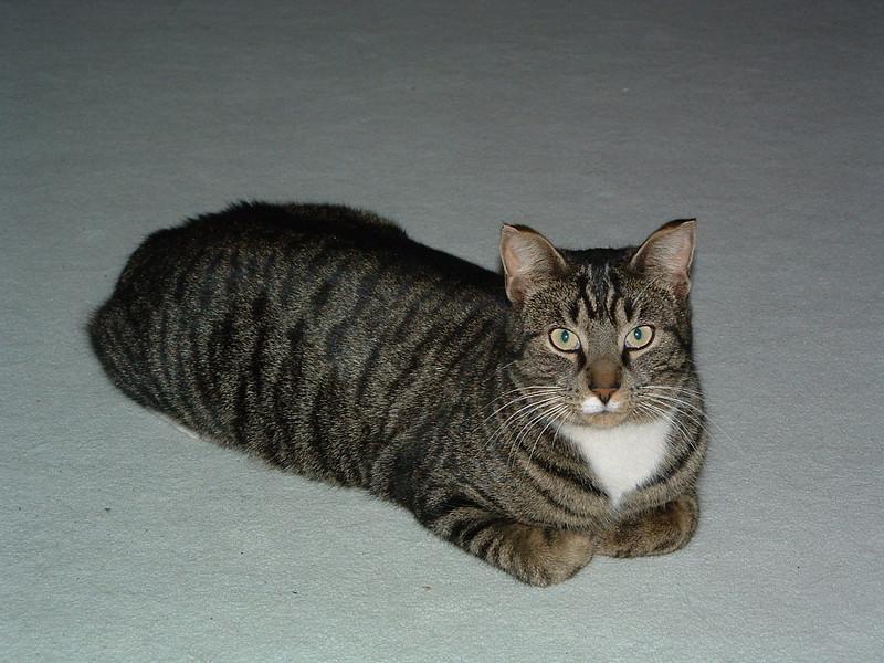 Angie & Gary's cat, Psycho