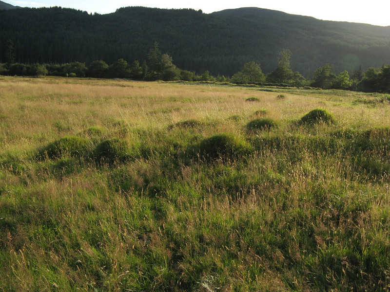 Field ant hills.  The ants reminded me of elves... wood elves... field elves.