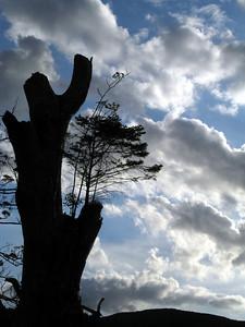 I like this tree.
