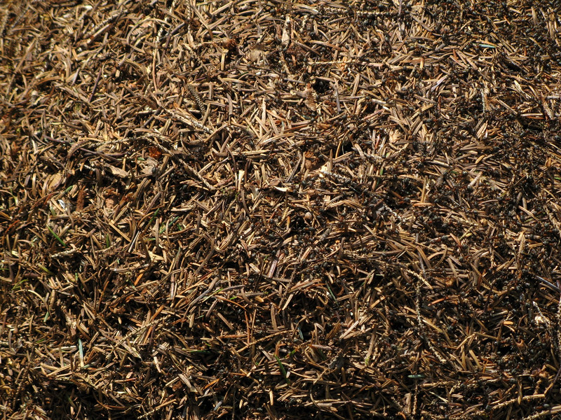 There were wood ants who built nests from piles of pine needles.  If the fire was close to their nest, all of the ants would use the side that was farther from the fire, so that they wouldn't get roasted.  I thought that this was smart.