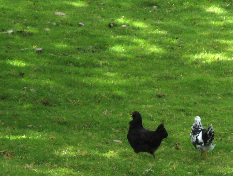 Also chicks.