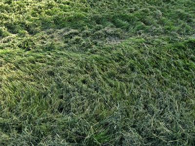 Mown grass.