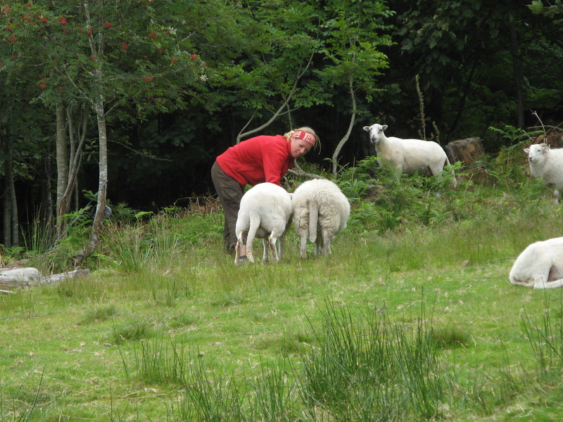 Sheeps!  They are saying Hi to Natasha!
