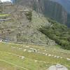 Hillside terraces Machu Picchu.