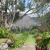 The restaraunt garden