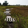 On the path  to Monomoy NWR