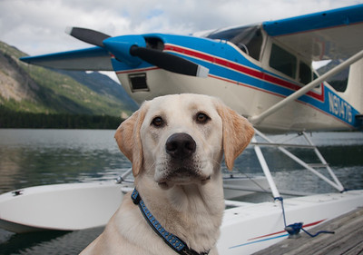 I don't like to fly. But when I do, I fly in seaplanes.  - The Most Interesting Dog in the World