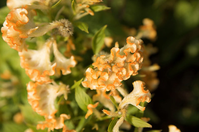 Chicago Botanic Garden 006