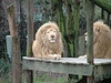 cincinatti zoo 1-06-2007-001