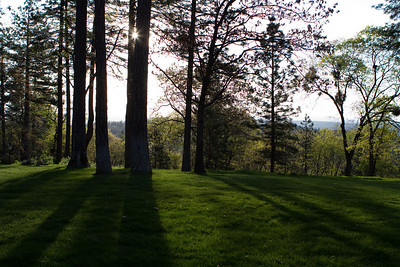 The top of the hill has a large grassy space among the trees.