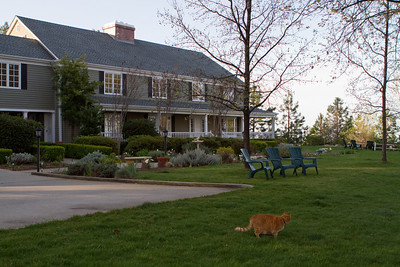 The front of the Inn, with one of the friendliest cats you're likely to encounter (outside only).