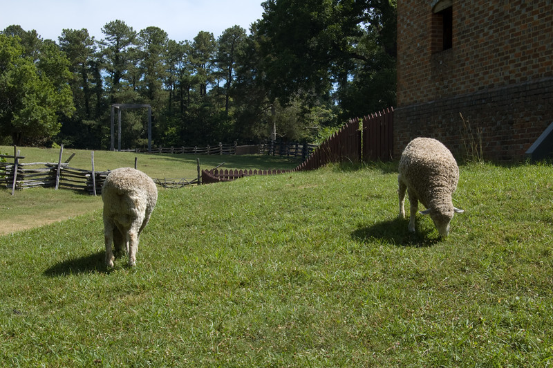 Livestock at Colonial Williamsburg