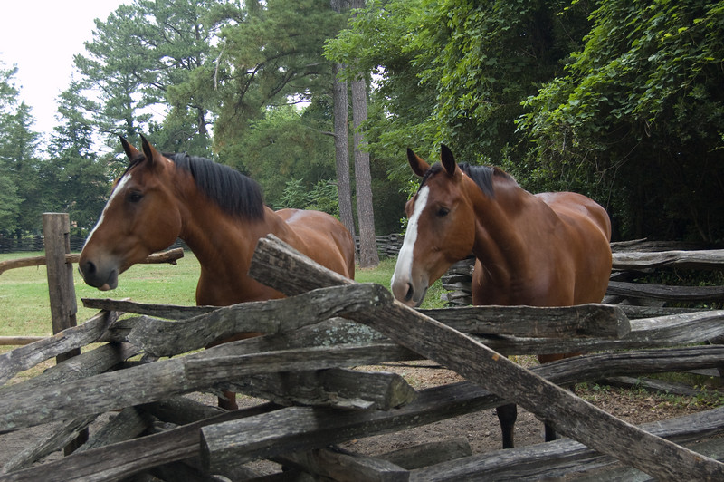 Horses at Colonial Williamsburg