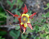 FlowerColombine