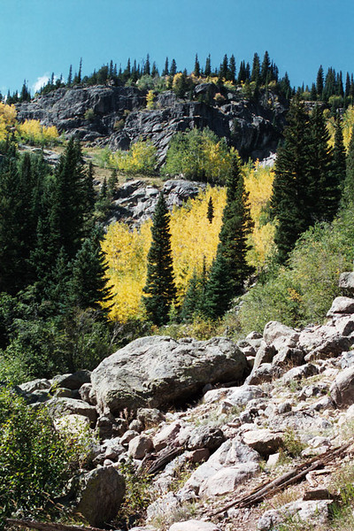 Aspens turning a golden color in September.
