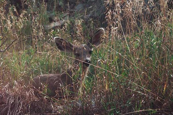 Taken in Rocky Mountain National Park.