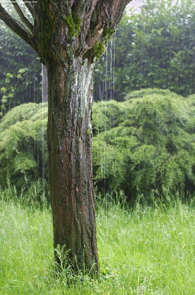 Heavy rain pouring down a tree