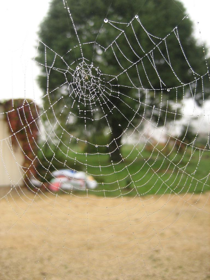 Spiderweb in morning's fog, late october