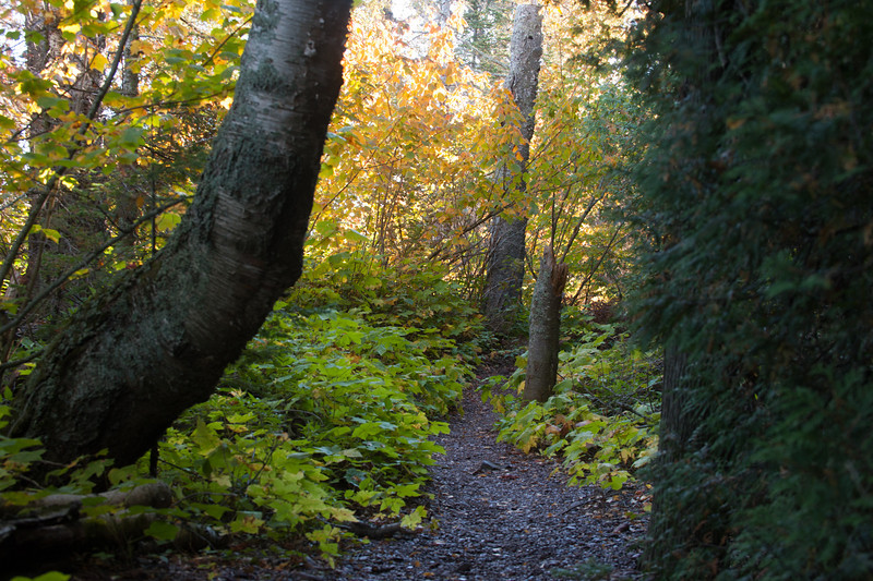 The forest understory