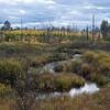 Beautiful wetlands in the Michigan Upper Penninsula