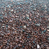 Agate Beach pebbles come in all sizes but are similar in rounded shapes.