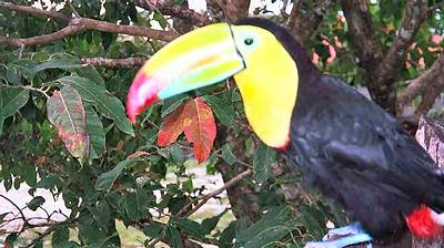 Costa Rica 1999