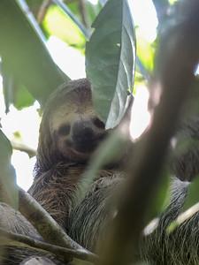 A sloth!