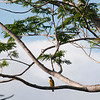 Best guess: Bananaquit<br /> <br /> Parador Hotel in Manuel Antonio, Costa Rica, 2011