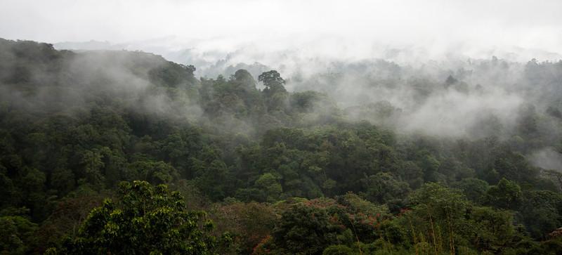 Costa Rica rain forest