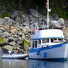 King Fisher in Grace Harbour