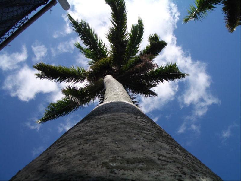 Nassau 8-Jan-2006.